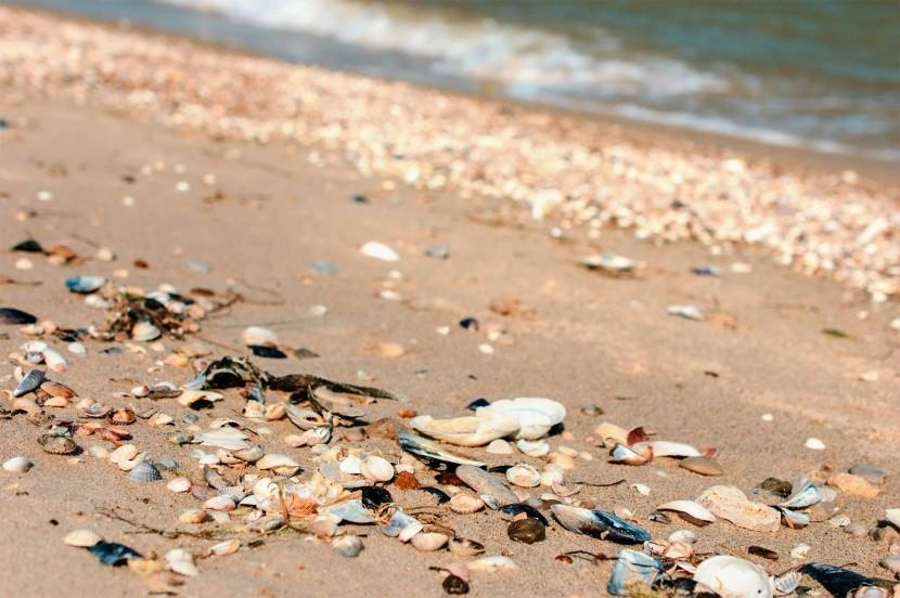 Pláž v Albeně bývá poseta mušlemi