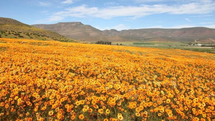 Namaqualand, Jihoafrická republika