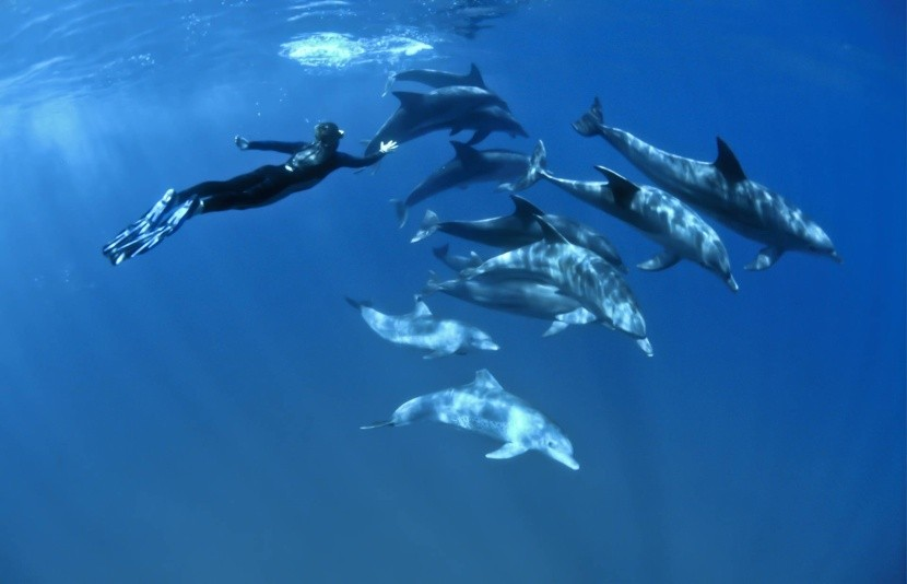 Ras Samadai, delfíní útes