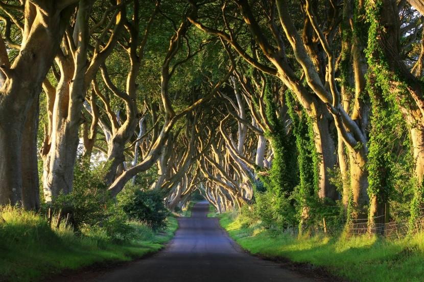 The Dark Hedges, Severní Irsko