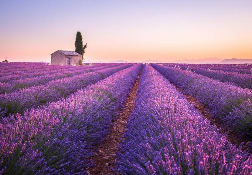Provence, Francie