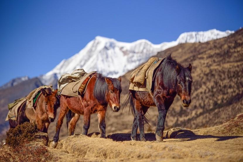 Trek v Bhútánu