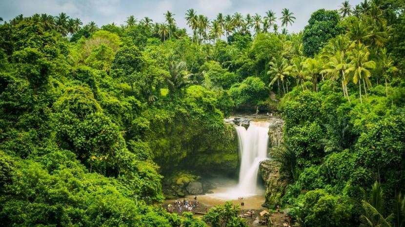 Deštný prales ve vnitrozemí