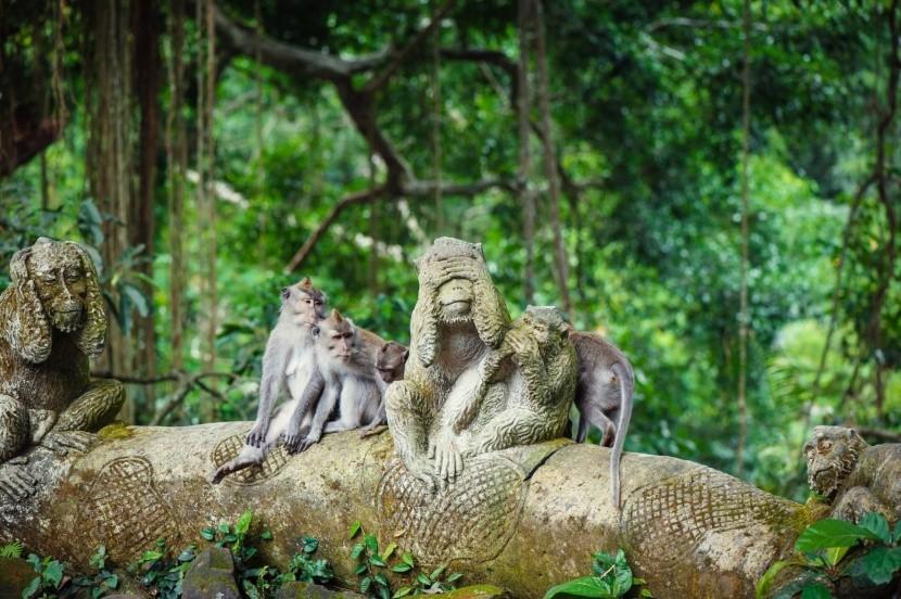 Všudypřítomné opice