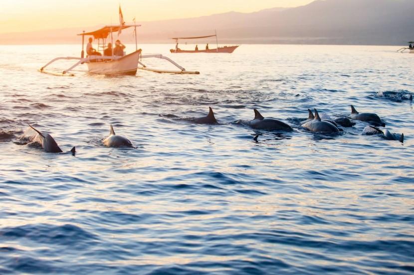 Možnost vidět delfíny