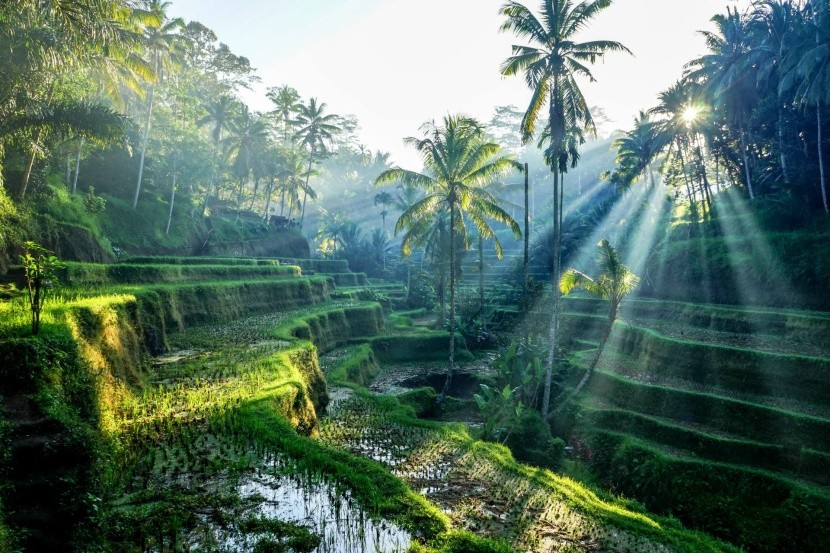 Fotogenické rýžové terasy