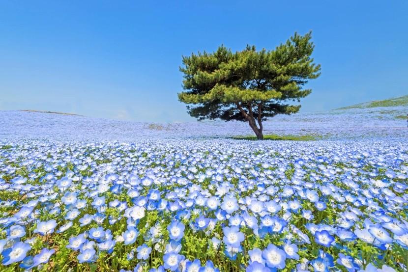 Hitachi Seaside Park na jaře