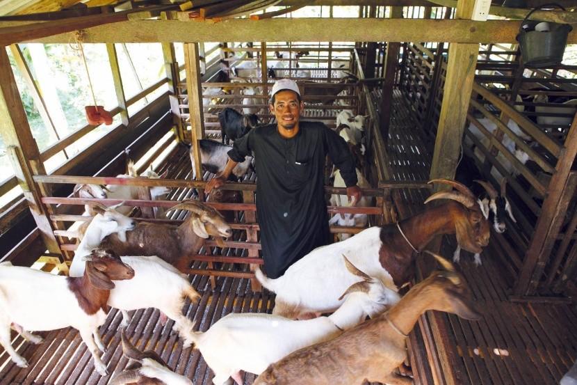 Kozí farma v Bang Rong