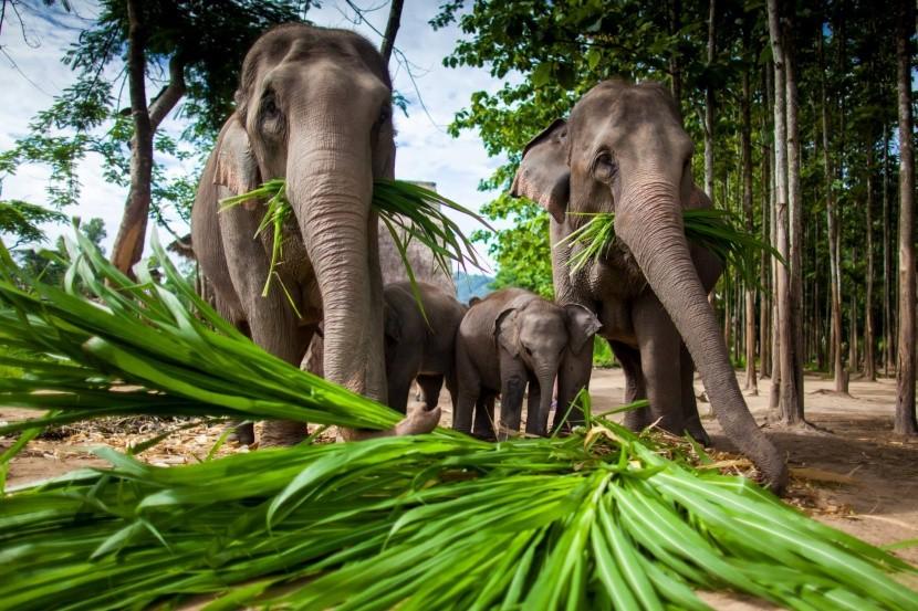 Sloní park u Čiang Mai, Thajsko