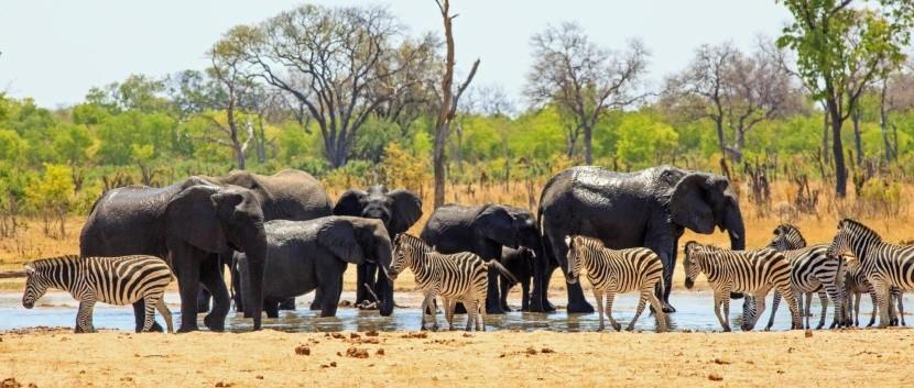 Národní park Hwange, Zimbabwe