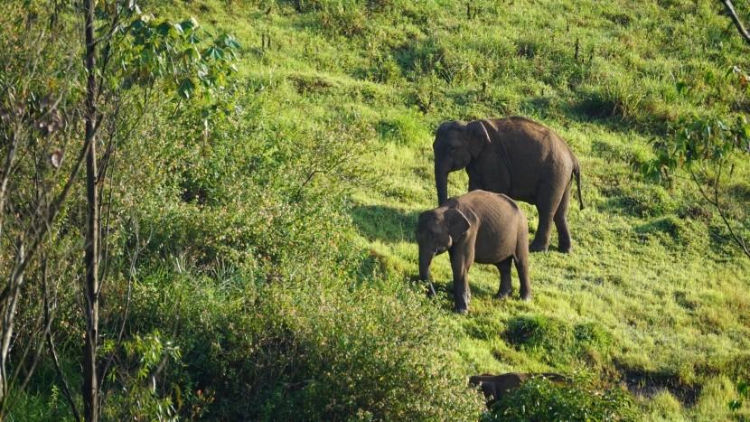 Národní park Periyar, Indie