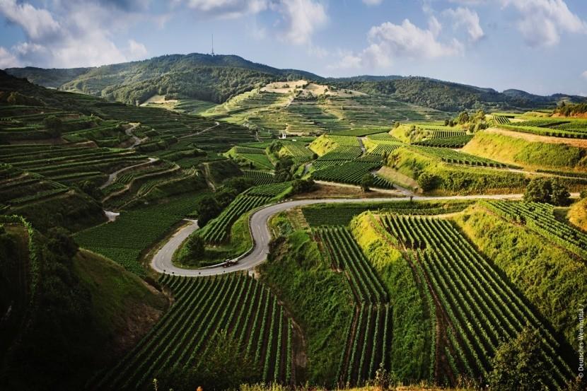 Vinařská oblast Baden