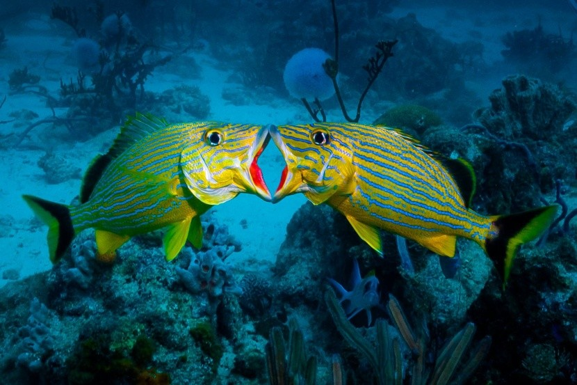 Podmořský život ve vodách Aruby