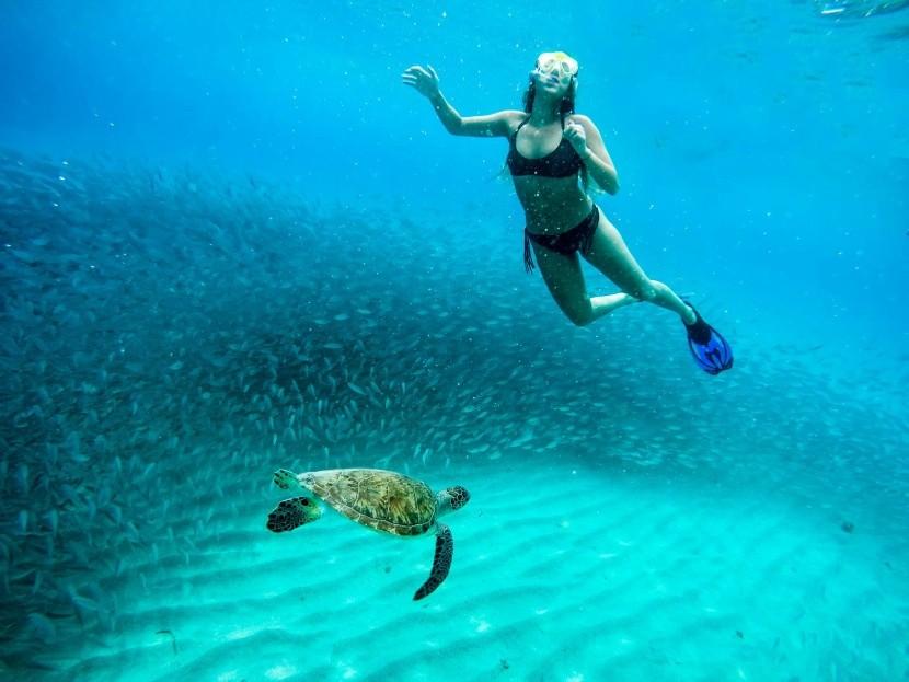 Podmořský život ve vodách Curacaa