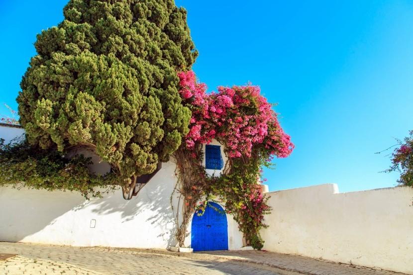 Tuniská architektura