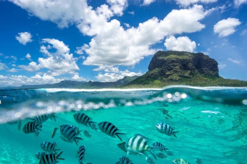 Podmořský život kolem ostrova Mauricius