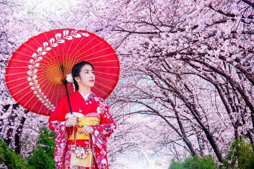 Japonci pohled na kvetoucí sakury milují