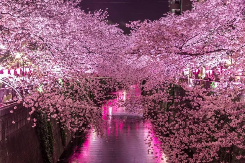 Sakury podél řeky Meguro