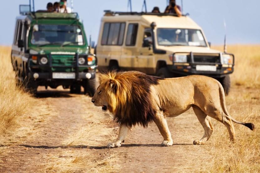 Nasedněte do jeepu a hurá na safari!