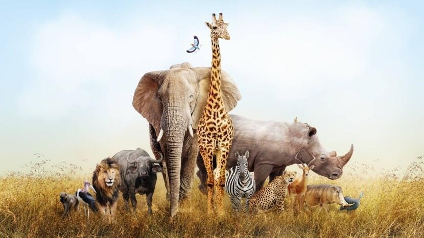 Zvířata Afriky - potkáte je všechny?