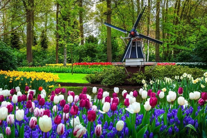 Květinový park Keukenhof v Holandsku