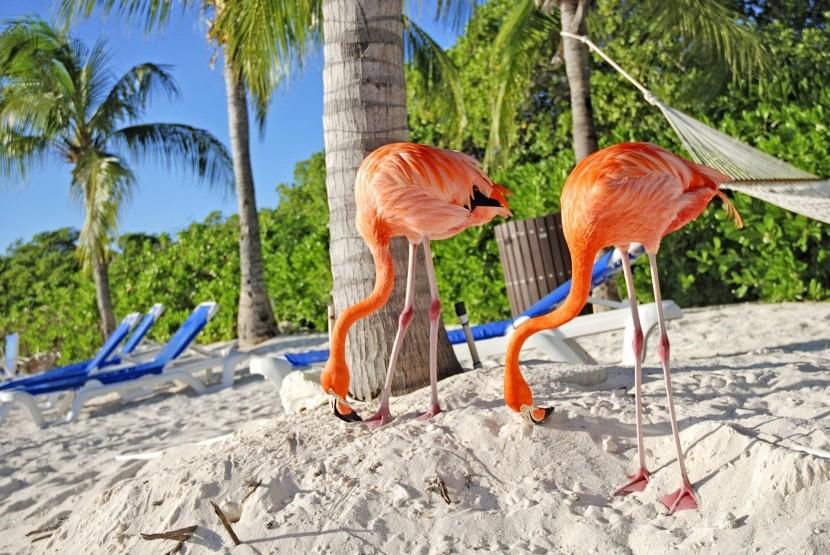 Pláž Flamingo, Aruba