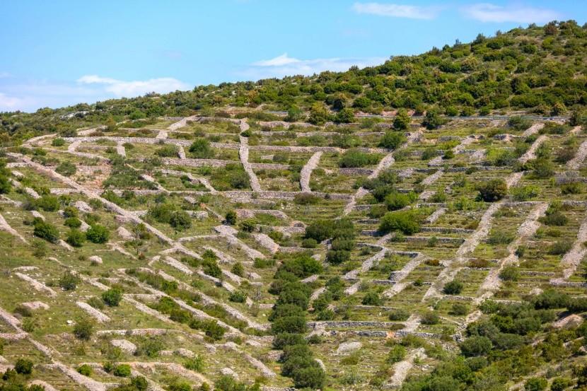 Starigradské polje na Hvaru