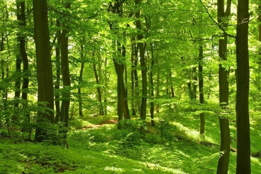 Původní bukové lesy Karpat