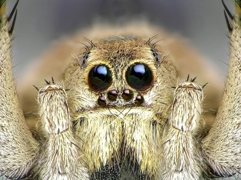 Nic pro arachnofobiky!