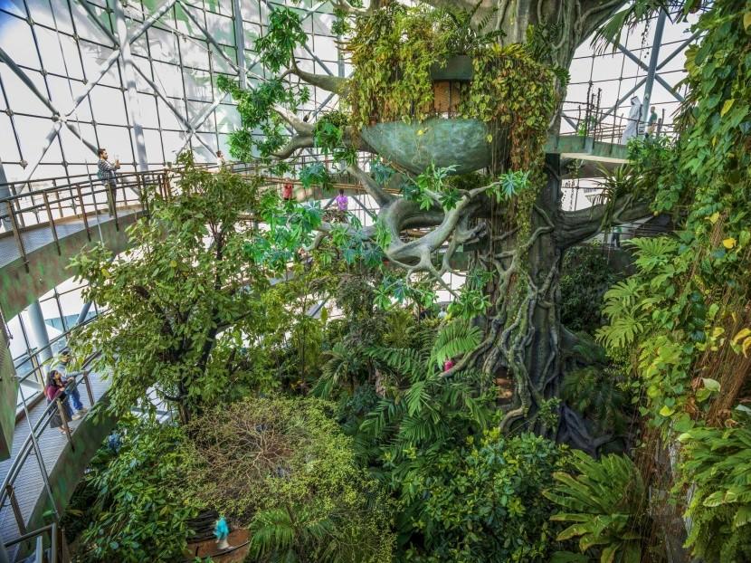 Deštný prales The Green Planet