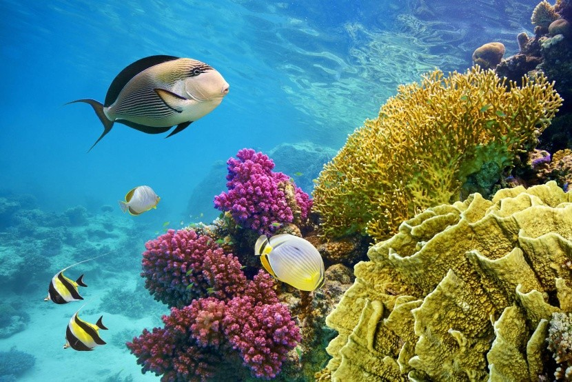 Život v Rudém moři, Hurghada