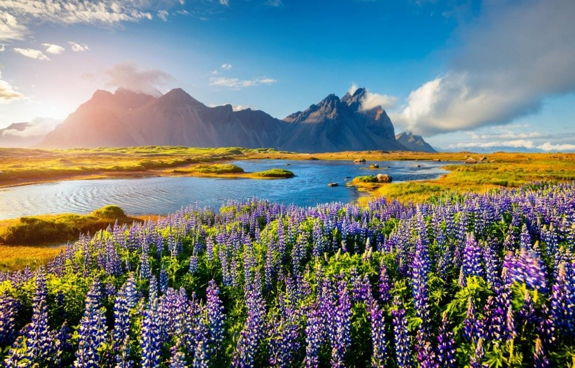 Kvetoucí Island