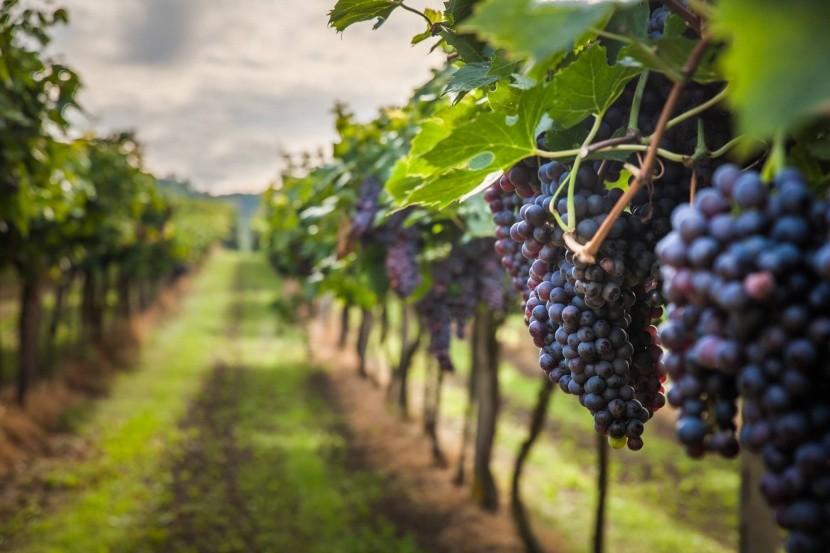 Vína z Ocoa