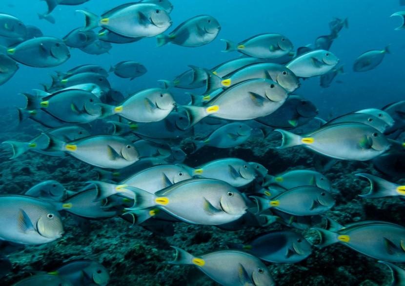 Podmořský život v okolí Kapverd
