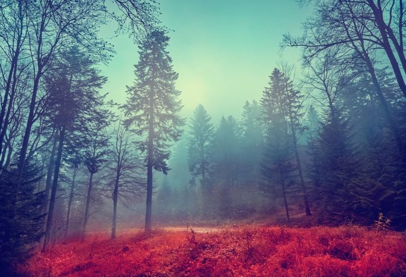 Tajemný les v Polsku