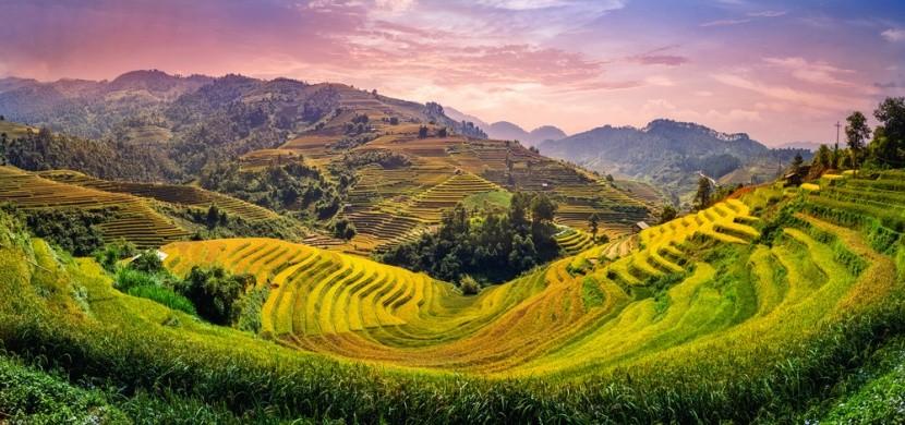 Vietnamská rýžová pole