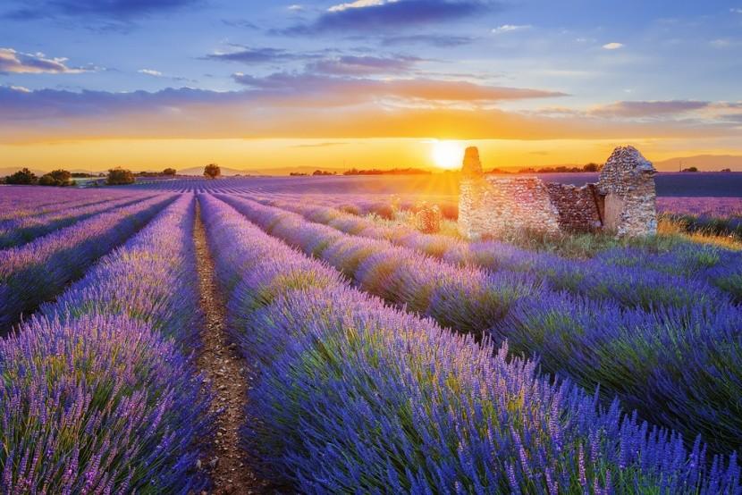 Levandulové Provence