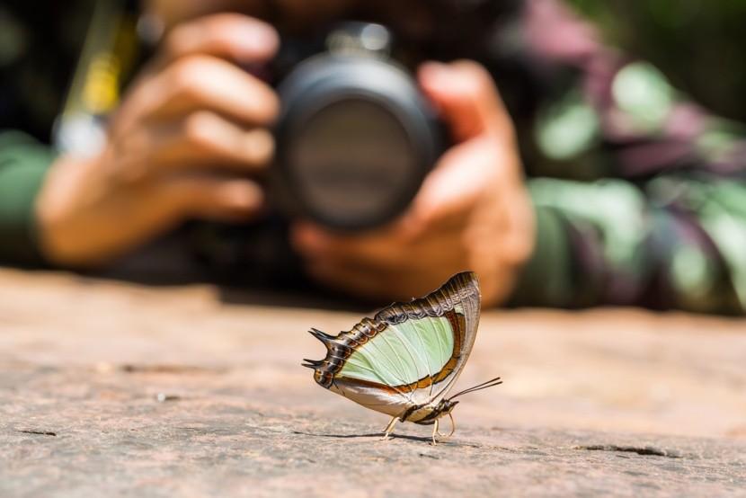 Zvířata v hledáčku fotoaparátů