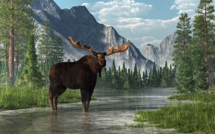 Divoká příroda a los v Kanadě