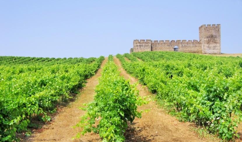 Nejlahodnější porugalská vína pocházejí z Ale