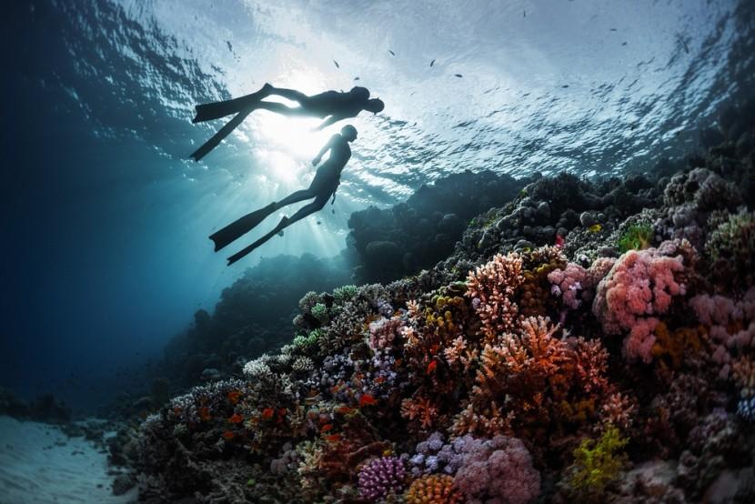 Korálový útes v Rudém moři, Egypt