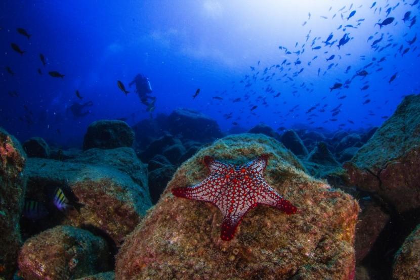 Podmořský život kolem břehů Panamy