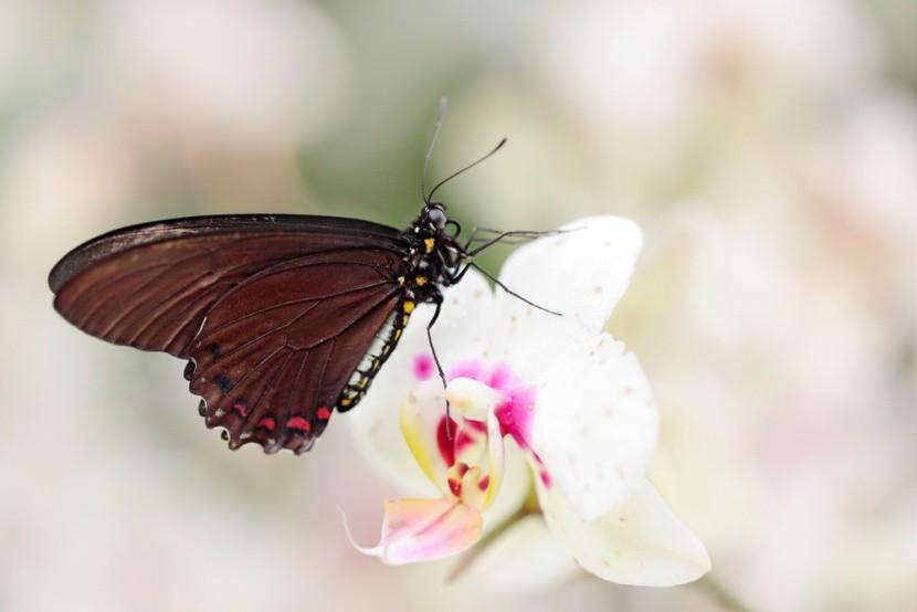 Scéna živé přírody: Divoce rostoucí orchidej