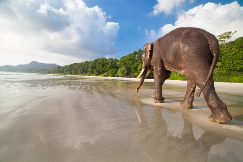 Na andamanské pláži můžete potkat i slona