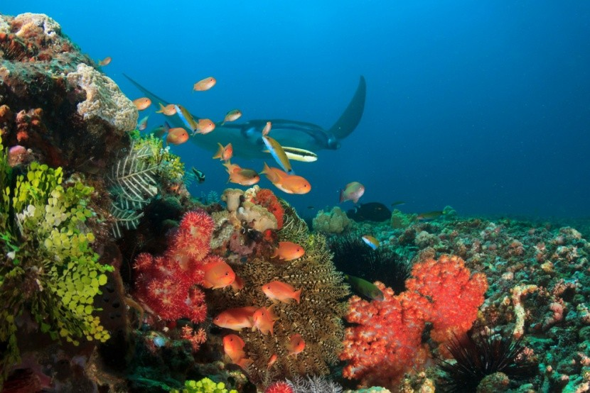 Ningaloo Marine Park, Austrálie