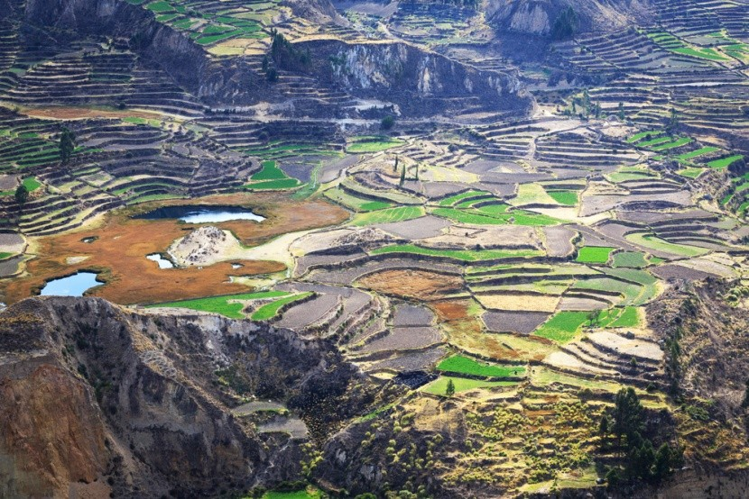 Colca Canyon v Peru