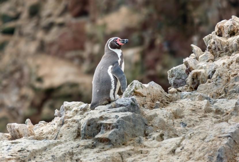 Přírodní rezervace Paracas