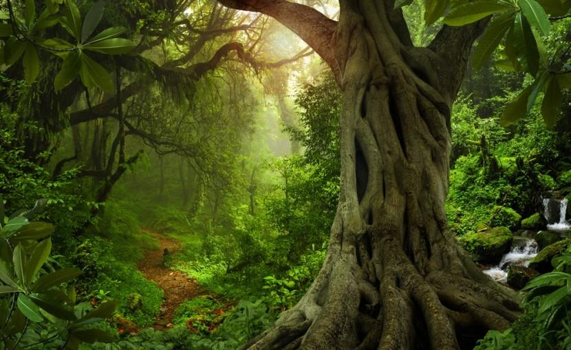 Naše vnoučata možná deštný prales už neuvidí