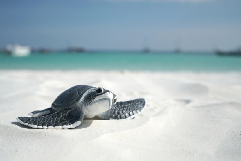 Ochraňujte mořské želvy!