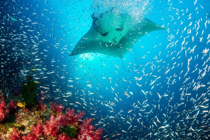Komodo je rájem potápěčů